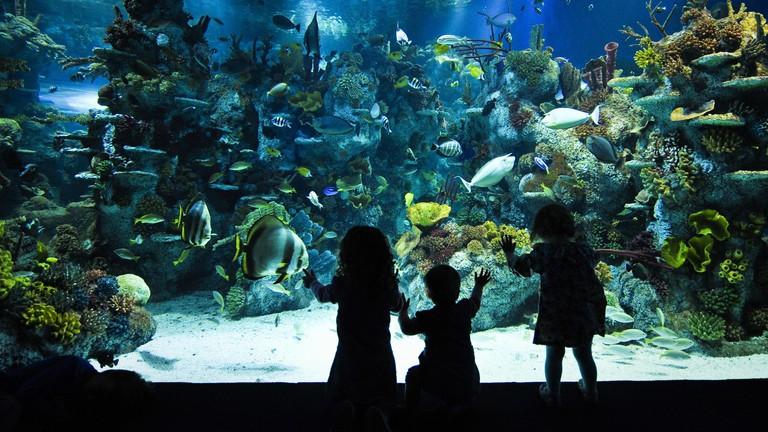 Blue Reef Aquarium - Bristol