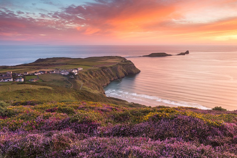 Sunset and Heather at Rhossili Bay overlooking Worm's Head in the Gower, South Wales. UK
