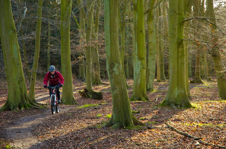 Female mountain biker on the ?Red? trail in Thetford Forest on the Norfolk-Suffolk border