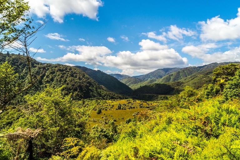 Tararua Forest Park, Otaki Forks, Otaki, North Island, New Zealand