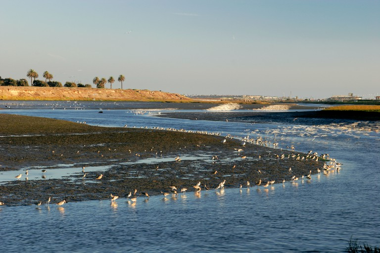 Bolsa Chica Ecological Reserve Huntington Beach California