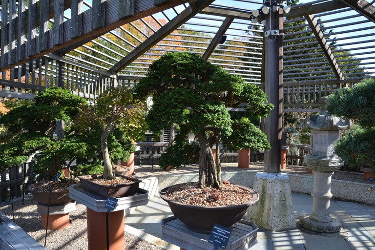 Sights around the Arnold Arboretum at Harvard University