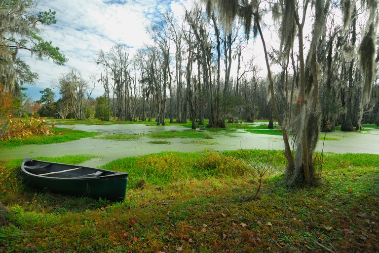 Audubon Swamp Garden at Magnolia Plantation, near Charleston, South Carolina.