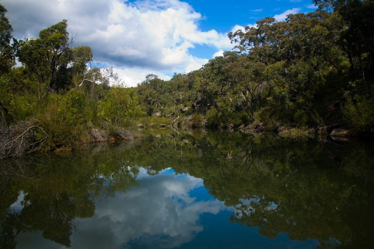 Australia New South Wales Heathcote National Park Native bush near to a creek in the Heathcote National Park