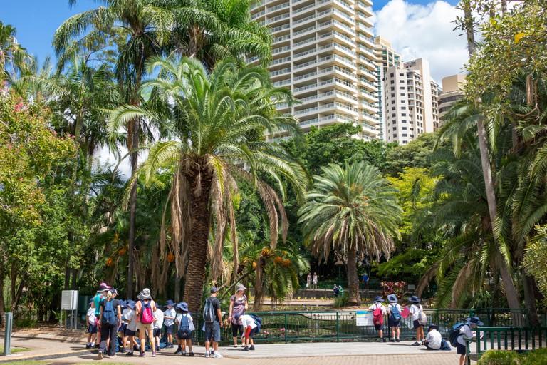 Australia, Queensland, Brisbane, Central business, District, CBD, City Botanic Gardens, skyline, skyscrapers, buildings, trees, student students educa