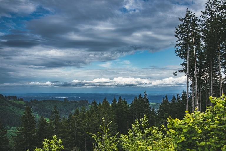 Capitol State Forest Washington landscape
