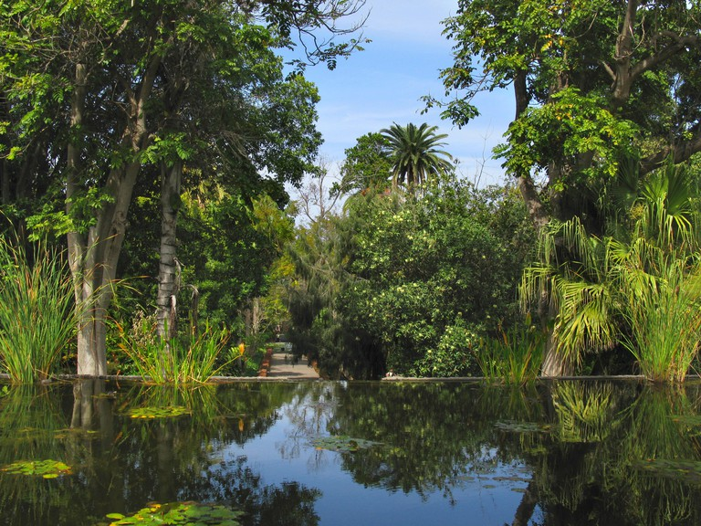pond and exotic plants at the Botanical Garden La Orotava, Canary Islands, Tenerife, Puerto De La Cruz