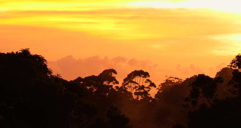 Sunrise in a Eucalyptus forest in D'Aguilar National Park.. Image shot 03/2016. Exact date unknown.