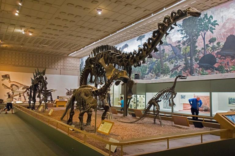 Peabody Museum of Natural History Yale University