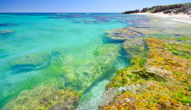 Penguin Island?s clear and sheltered waters are ideal for swimming, boating, fishing and snorkelling. Shoalwater Islands Marine Park