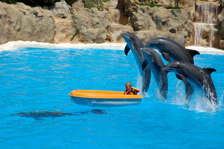 Dolphin show, Loro parque, Tenerife, Canary islands