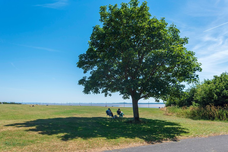 Couple relaxing in the shade of a large tree on Otterspool Prom. Liverpool North West England. Merseyside