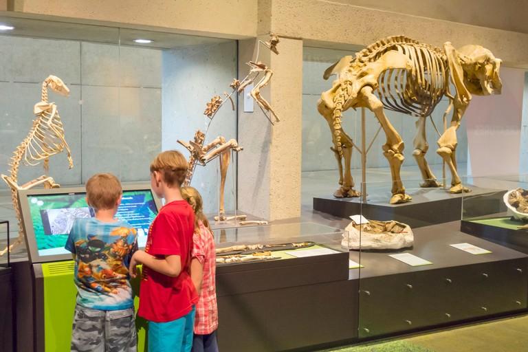 Australia, Queensland, Brisbane, South Brisbane, Cultural Centre, center, Queensland Museum & and ScienceCentre, animal, skeletons, exhibit exhibits e