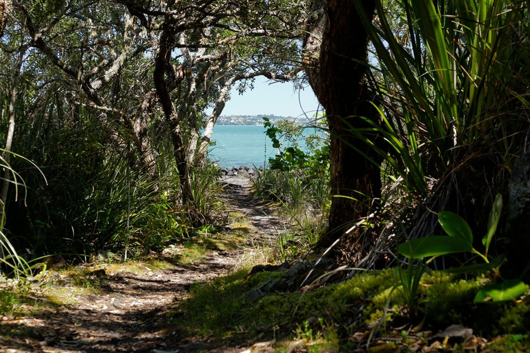 Day trip, hiking and trail paths lead through the scenic Rangitoto Island Wildlife Sanctuary near Auckland, New Zealand
