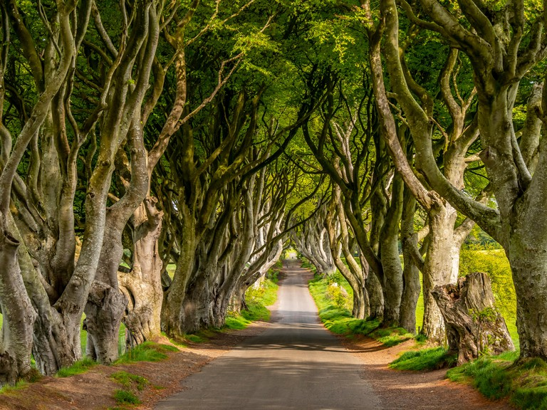 The Dark Hedges of Stranocum in Northern Ireland - travel photography