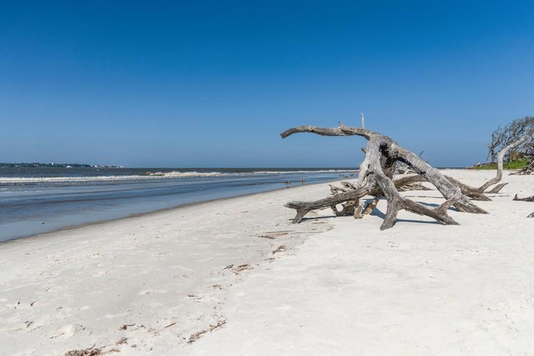 Jekyll Island Georgia Driftwood Beach Shoreline