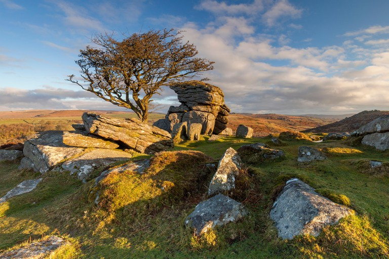 A hawthorn tree stands among the rocks in Dartmoor National Park