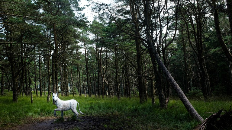 White Unicorn on the Pendle Sculpture trail, Aitken wood, Barley, Lancashire, UK