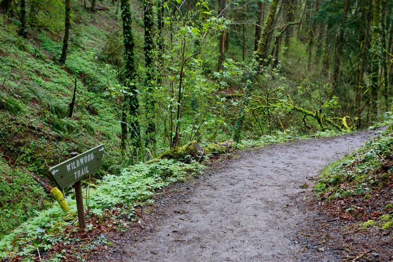 Wildwood Trail meanders through Forest Park, Portland, Oregon