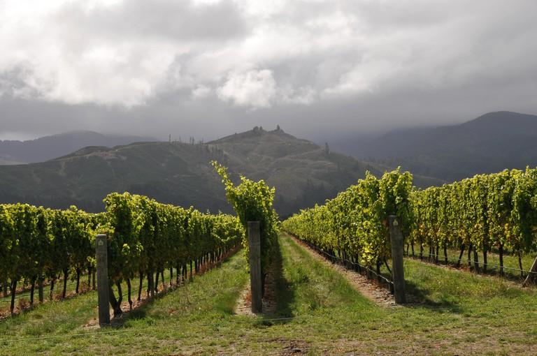 Around New Zealand - Marlborough Wine Country