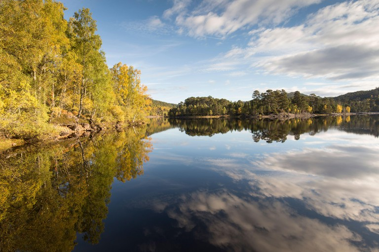 Tree reflections in Loch Beinn a Mheadhoin, Glen Affric, Highlands, Scotland, October 2015.