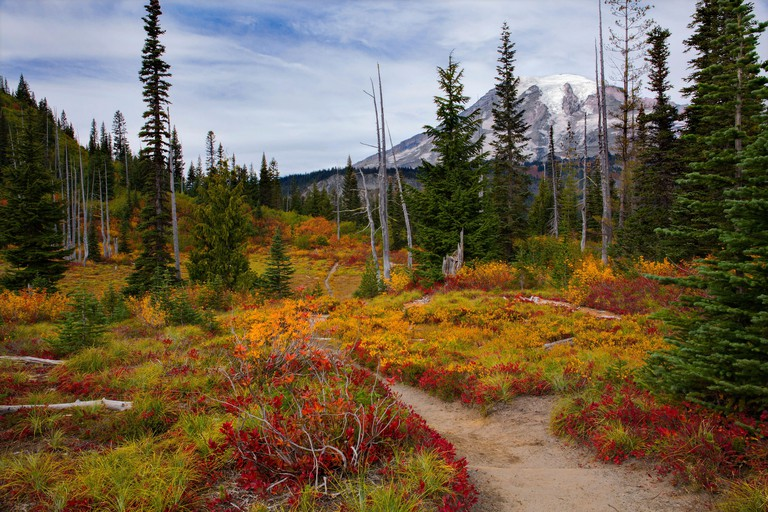 Stunning fall foliage along a hiking trail at Mt. Rainier National Park in Washington state