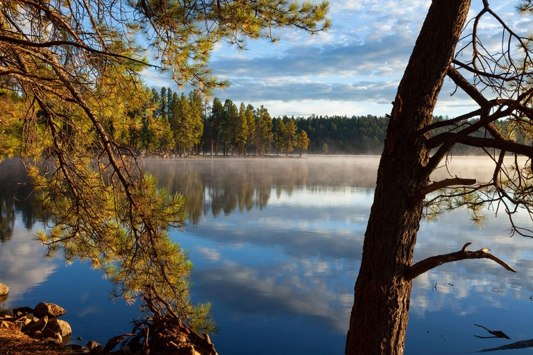 White Mountain Apache Reservation  AZ / SEPT Early morning in late summer at Hawley Lake. Conifer frames a scene looking toward a point .