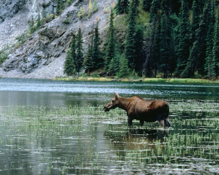 Horseshoe Lake Denali National Park