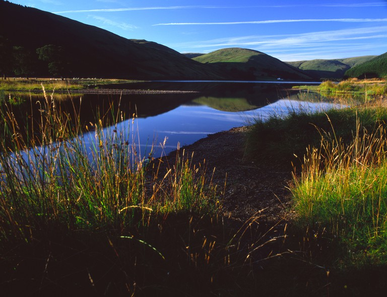 Summer Morning, Loch of the Lowes, Scottish Borders