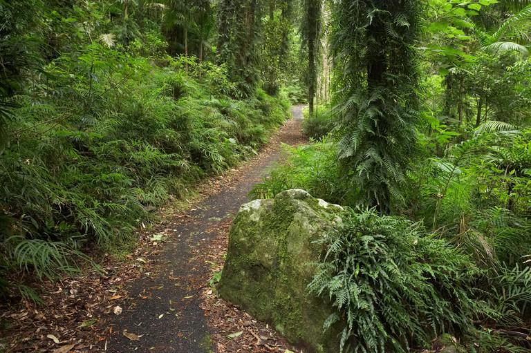 Wonga Walk Dorrigo National Park New South Wales Australia