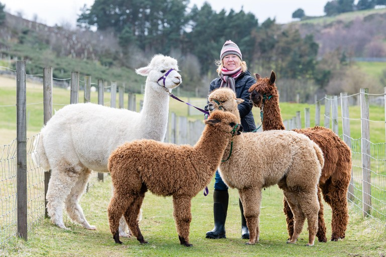 Bobcat Alpaca's, Bonaly, Owner Cath Crosby with Milo, Calvin, Vivace and Carmelle