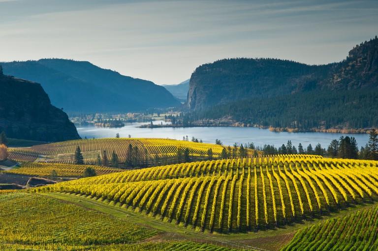 Blue Mountain Vineyard in fall, Okanagan Falls, Okanagan Valley, British Columbia, Canada