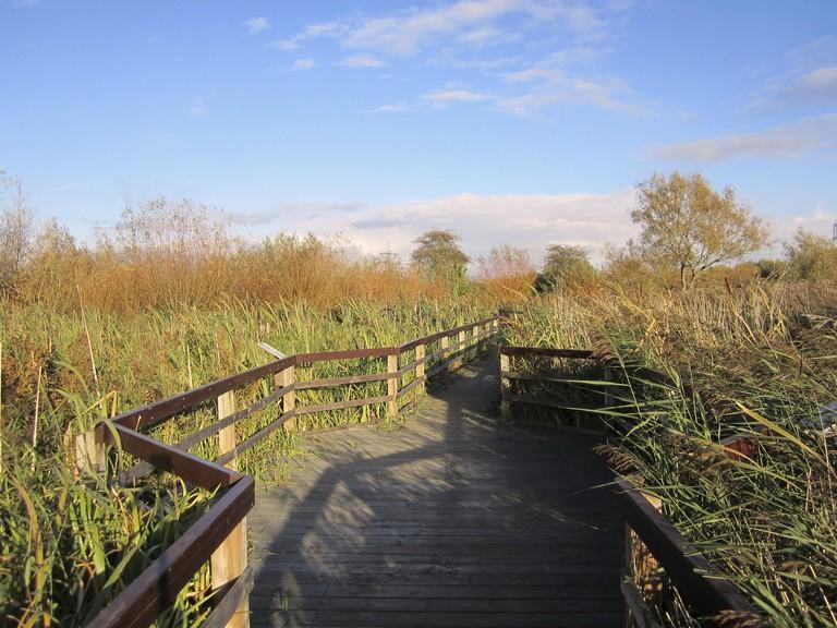 Boardwalk in wetland habitat, Rye Meads RSPB Reserve, Hoddesdon, Lea Valley, Hertfordshire, England, october
