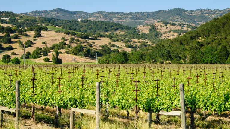 Sonoma Valley vineyard in Spring, California