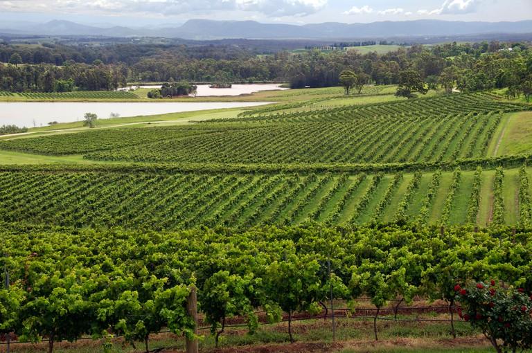Panoramic view Audrey Wilkinson vineyards Hunter Valley NSW Australia