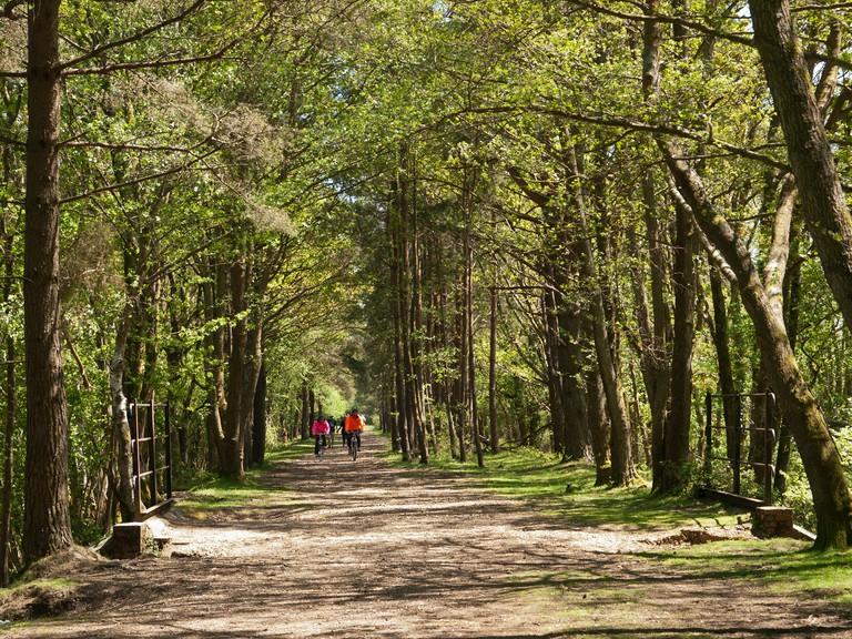 Old Holmsley railway line now used as a cycle and walking track through the New Forest Hampshire England UK. Image shot 05/2013. Exact date unknown.