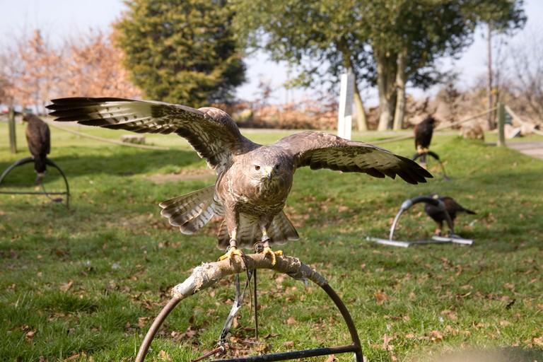 birds of prey centre in Dalkeith in Dalhousie castle