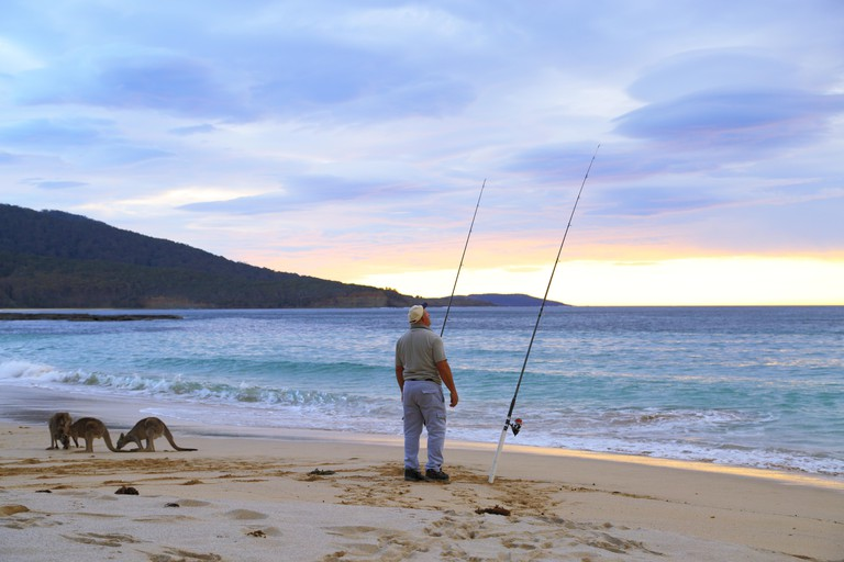 Early morning and a middle-aged man is salmon fishing with kangaroos for company at Depot Beach, NSW, Australia.