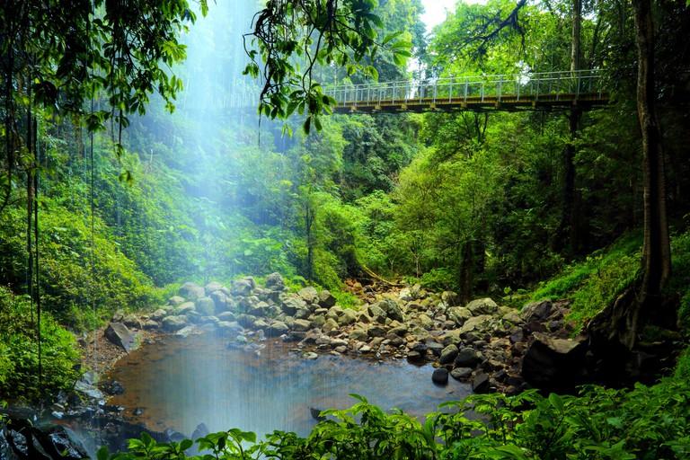 Crystal Shower Falls and suspension bridge along the Wonga Walk in Dorrigo National Park, Dorrigo, NSW, Australia.