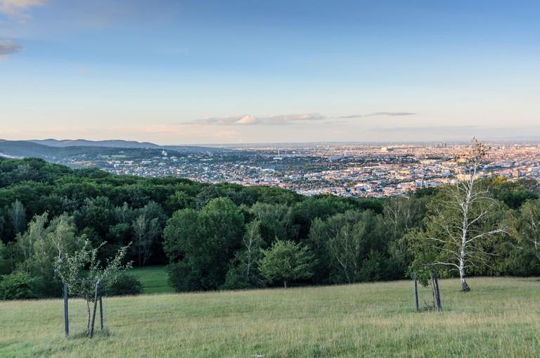 """Wien, Vienna: """" Wiener views """" in the Lainzer Tiergarten overlooking the Vienna Woods , the Kirche am Steinhof ( golden dome ) a"""