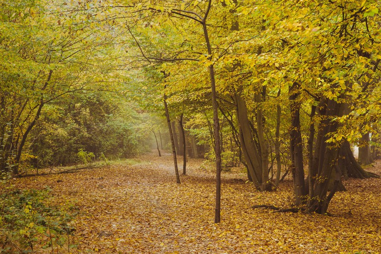 Path Through Belfairs Woods with Lots of Autumn Colour
