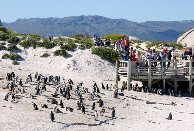 Boulders beach south africa - tourists watching the African Penguins, Boulders beach, Cape Town, South Africa