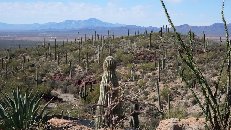 The Arizona-Sonora Desert Museum is a 98-acre (40 ha) zoo, aquarium, botanical garden, natural history museum, publisher, and art gallery founded in 1