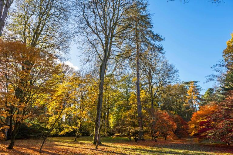 Acer Grove in Westonbirt Arboretum, near Tetbury, Gloucestershire, England, UK