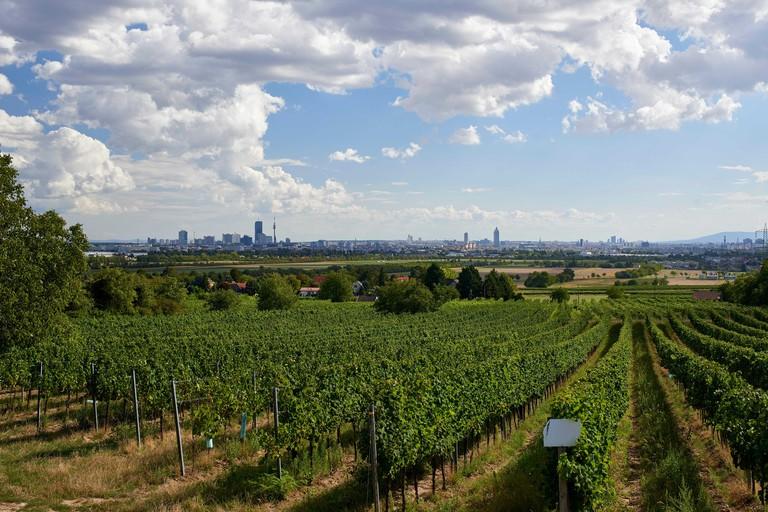 View over vineyards towards Vienna city - heuriger at the top of Stammersdorfer Kellergasse road