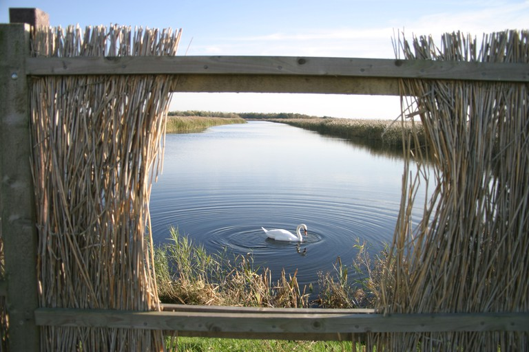 Swan at the Newport Wetlands in South Wales. Image shot 2005. Exact date unknown.