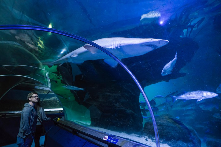 Deep Sea World, North Queensferry, Edinburgh, Scotland. Underwater tunnel walk. A shark passes overhead.