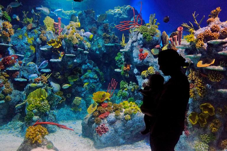Bristol Aquarium, Bristol, UK