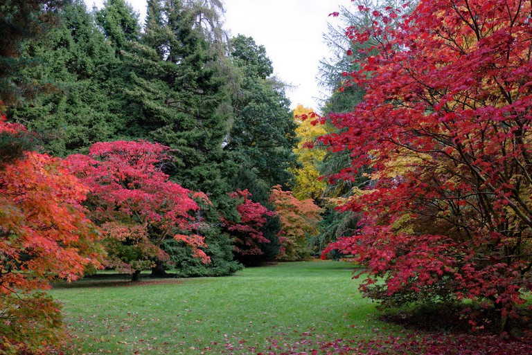 Autumn (Fall) colours at Westonbirt arboretum in the Cotswolds an area of outstanding natural beauty in the South Western part of the United Kingdom