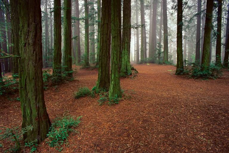 Redwoods Regional Park Oakland Hills California